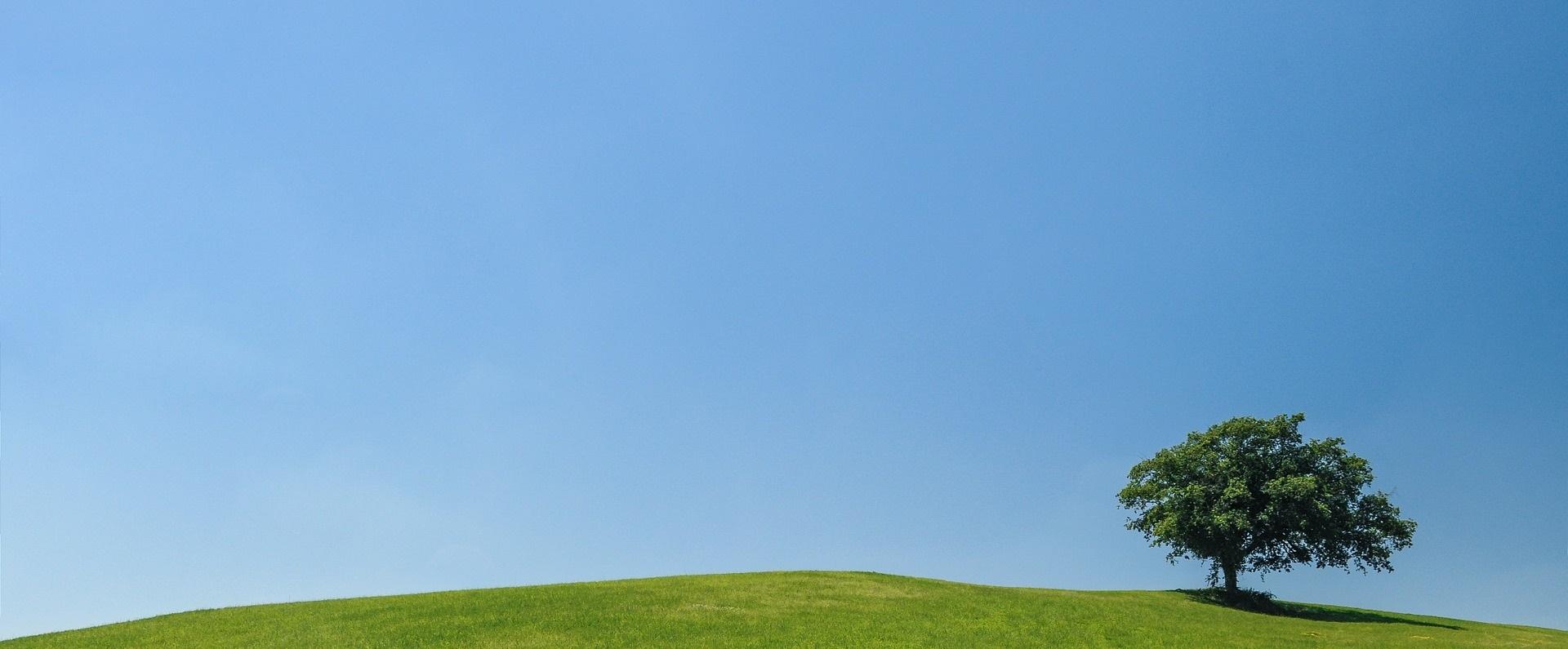 Gräsfält med ensamt, grönskande träd mot blå himmel.