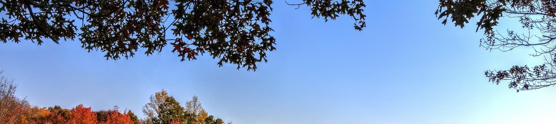 Blå bakgrundsbild, höstträd.