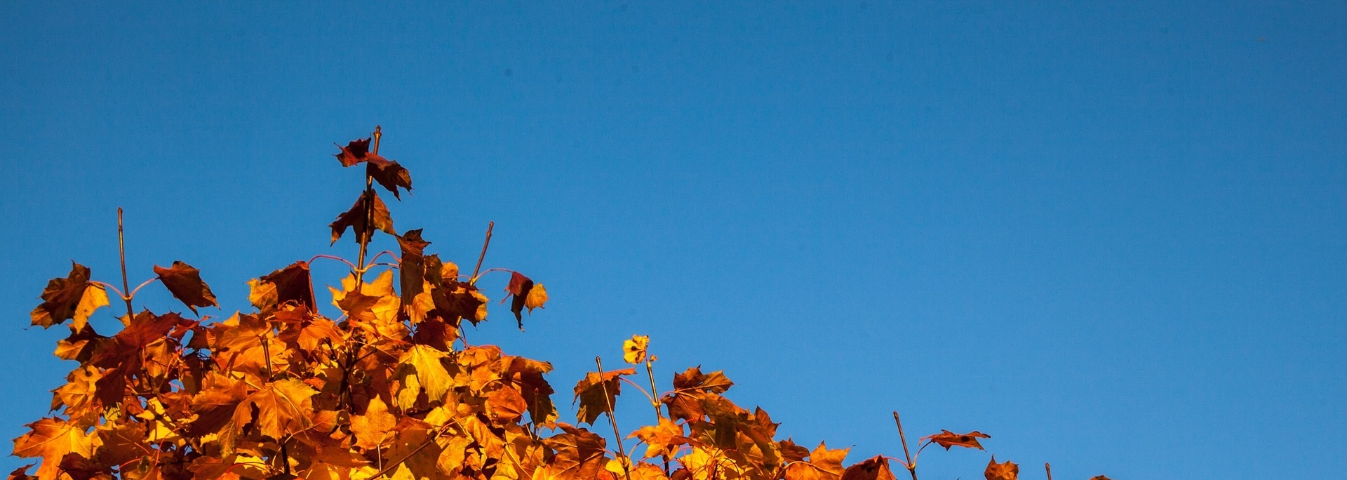 Blå bakgrundsbild, höstlöv