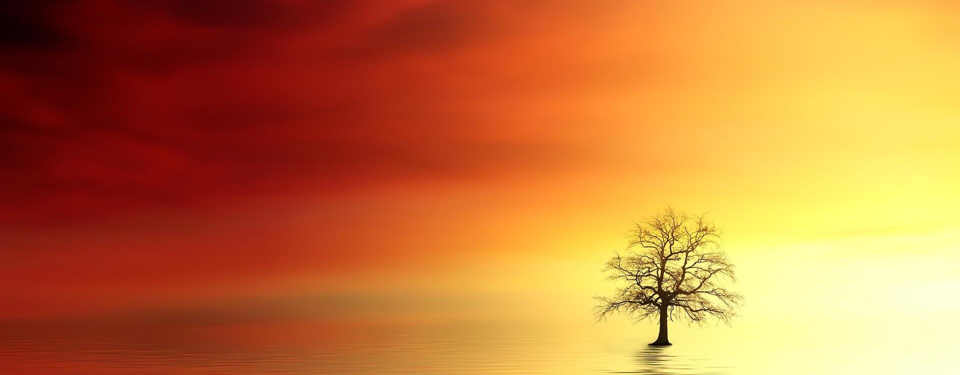Solnedgång, gul och röd med ett träd.