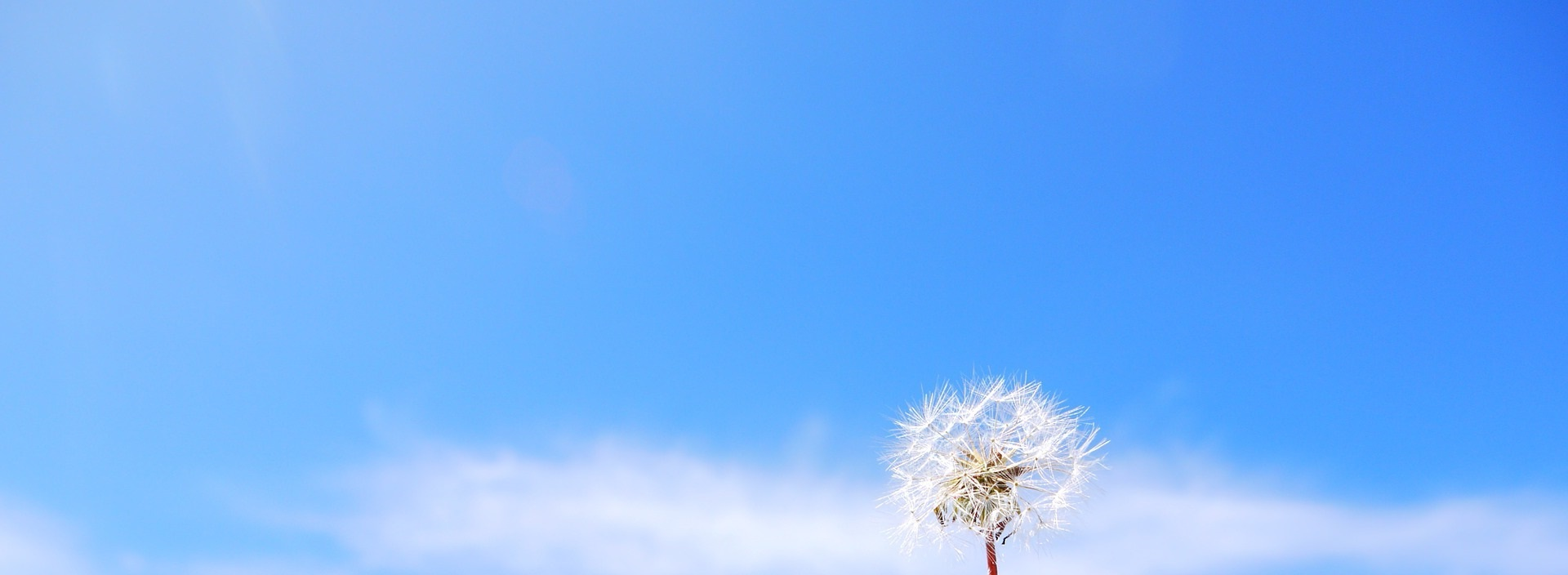 Blå bakgrundsbild, lite moln med maskrosblomma.
